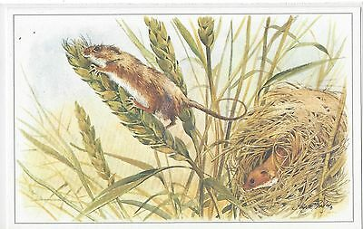 Harvest Mouse -Artist George Busby