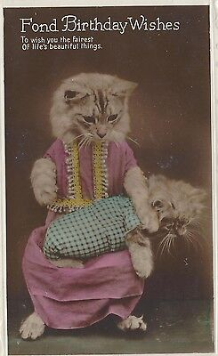 Dressed cat and Kitten - Photo - tinted