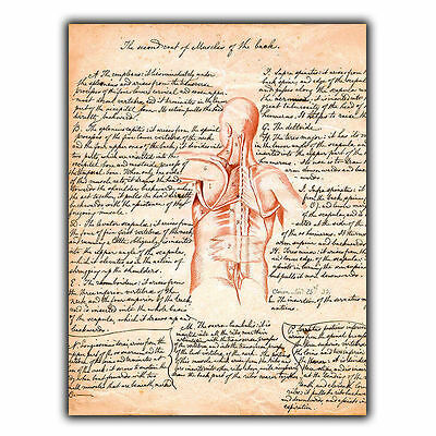 METAL SIGN WALL PLAQUE MUSCLES OF THE BACK Vintage Print Surgery/Chiropractor