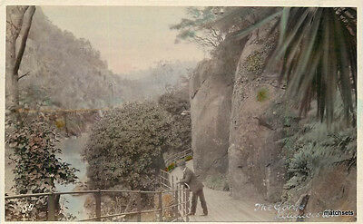 Australia C-1910  Launceston Tasmania Hand Tinted RPPC Real Photo 11731