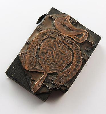 INTESTINES TECHNICAL MEDICAL Engraved COPPER PRINTING PLATE