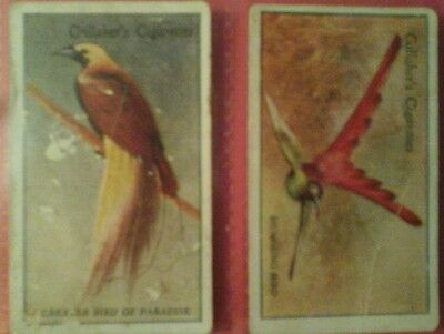 Gallaher Cigarette Cards - Zoo Tropical Birds