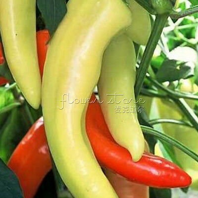 Garden Vegetable 100 Sweet peppers Seeds Resistant to Pest All Natural 3