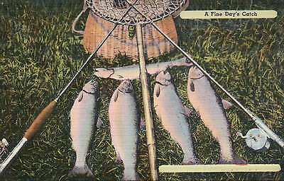 A Fine Day's Catch, Fish Fishing - Beautiful Old Vintage Standard Linen Postcard