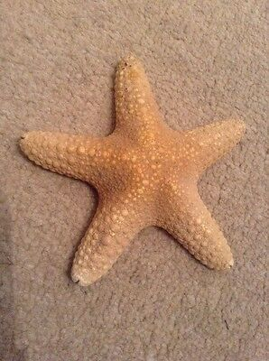 """Starfish Textured Approx 5.5"""" Wide"""
