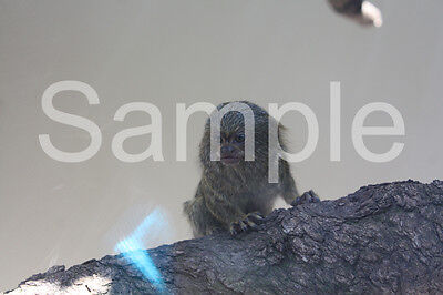 Digital Image Of Little Animal Taken By Me JPG Format Email Only One Penny