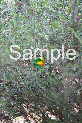 New Digital Image Of Colorful Parrot Taken By Me JPG Format Email Only One Penny