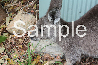 Digital Image Of Kangaroo JPG Format Email One Cent Taken By Me Penny Cent