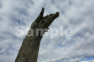 Digital Photo Image Of Tree Taken By Me JPG Format Email Only One Cent