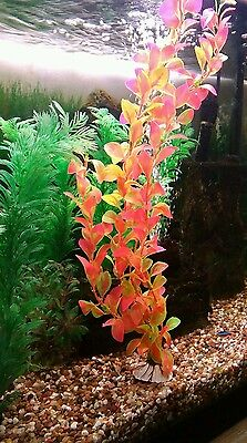 Biorb **fluval **nano Type Etc Fish Tank *** Plastic Plant 1 X X /large  ***new