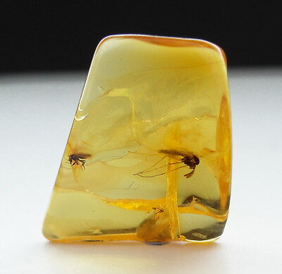 GENUINE FOSSILISED INSECT x2 IN AMBER circa 44 million BC