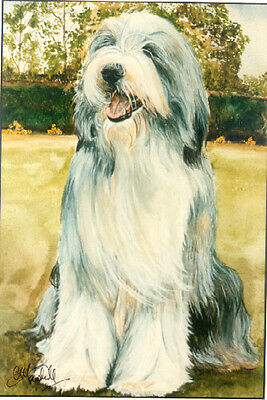 Bearded Collie Art Print by UK Artist CAH Marshall