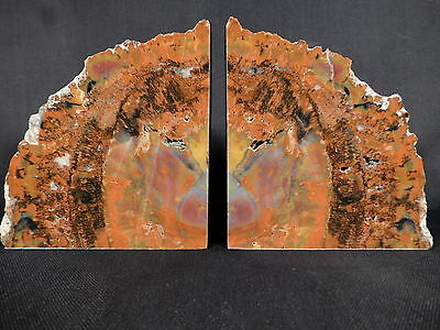 A BIG Beautiful Pair of Triassic Arizona Petrified Wood Fossil Bookends 2890gr e