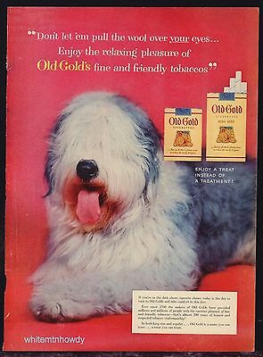 1954 OLD ENGLISH SHEEPDOG Vintage Portrait Photo Old Gold Cigarettes AD