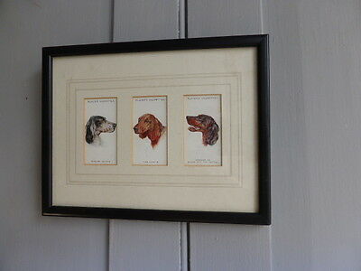 Set of 3 framed Players Cigarettes cards Setter Dogs