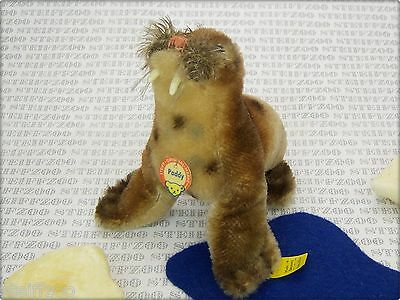 STEIFF altes 10 cm kleines WALROSS PADDY KFS * old small WALRUS all ID 4310,00