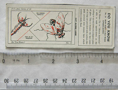 1962 Typhoo Do you Know card No. 13 How does a fly walk upside-down?