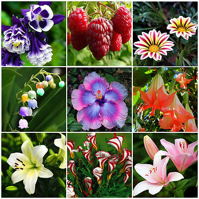40~500Pcs Flower Rare Fruit Seeds Garden Plant Fresh New Lily Decor Gift