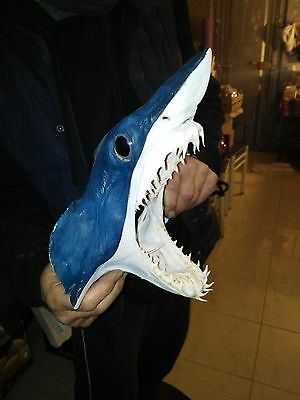 "Mako Shark Head 270mm Tiburon Jaws taxidermy requin  Free mako tooth 1"" 32-2"