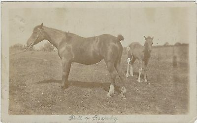 Horse Postcard - COURT-REAL PHOTO- Doll and Beauty