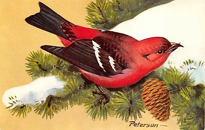 White-Winged Crossbill ©1957 Natl Wildlife Federation Peterson PC, Songbird-5
