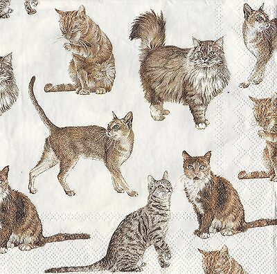 20 Paper Napkins Ideal Home Range My Favourite Cat