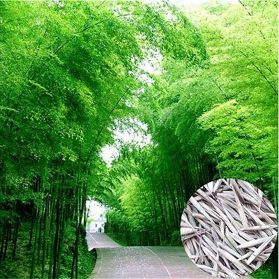 100 Pcs Fresh Seeds Phyllostachys Pubescens Moso-Bamboo Seeds Garden Plants
