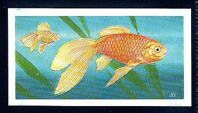 BROOKE BOND (SOUTH AFRICAN) OUR PETS 1967 No.12 GOLDFISH