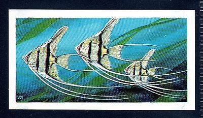 BROOKE BOND (SOUTH AFRICAN) OUR PETS 1967 No.13 EXOTIC FISH