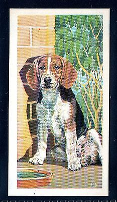 BROOKE BOND (SOUTH AFRICAN) OUR PETS 1967 No.2 THE BEAGLE