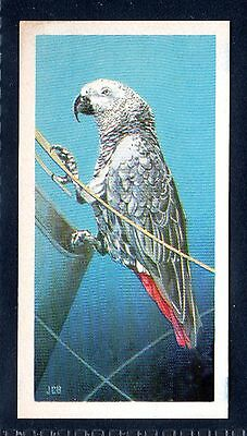 BROOKE BOND (SOUTH AFRICAN) OUR PETS 1967 No.32 THE EAST AFRICAN GREY PARROT