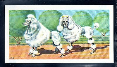 BROOKE BOND (SOUTH AFRICAN) OUR PETS 1967 No.6 THE POODLE