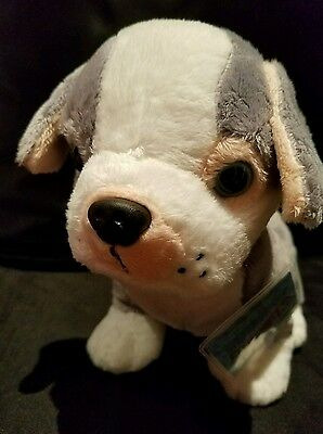 Webkinz JANUARY RELEASE: PITBULL PUPPY  -  NWT