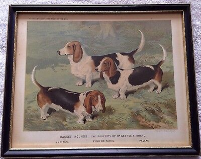 CASSELLS BOOK OF THE DOG BASSET HOUNDS 1880s VICTORIAN OLD ANTIQUE PRINT PICTURE