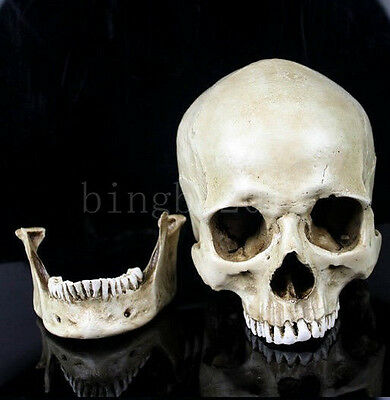 11X7X8.5cm Small Human Skull Replica Resin Model Medical Realistic Model