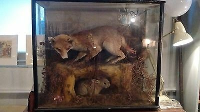 Vintage Taxidermy of Fox and Rabbit in Glass Display Case