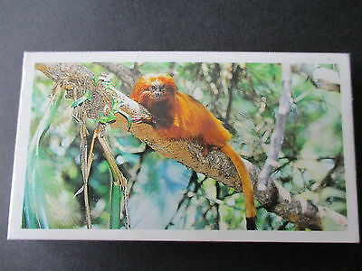 Grandee**disappearing Rainforest** Set Of 30 Cards