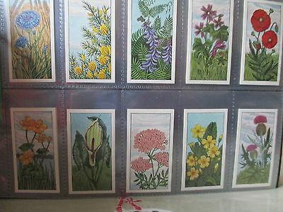 Typhoo**wild Flowers**a Set Of 24 Cards