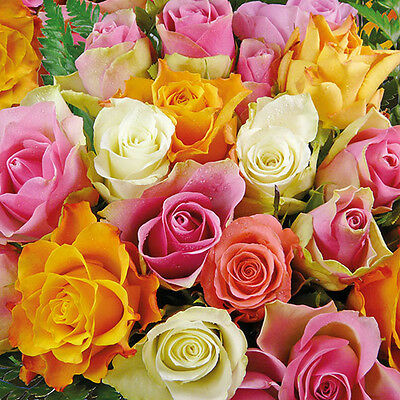 Ambiente Paper Napkins  Serviettes Colourful Roses Pack of 20 Luxury 3 Ply Party