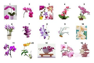 30 Personalized Orchids Return Address labels Buy 3 get 1 free