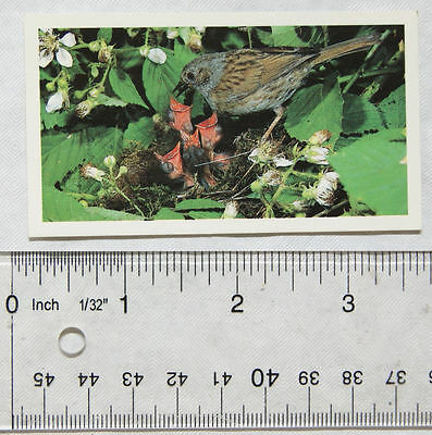 1990 Grandee Britain's Wayside Wildlife No. 8 Hedge Sparrow