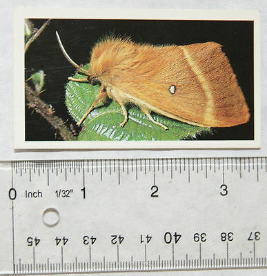 1990 Grandee Britain's Wayside Wildlife No. 4 Oak Eggar Moth
