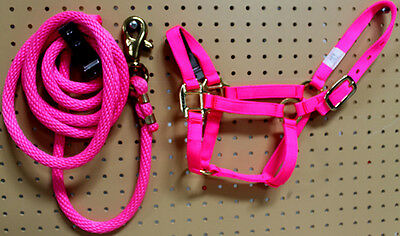 Goat Sheep Mini Foal Donkey Nylon Halter Lead Rope Pink Made in USA Rodeo 60613M