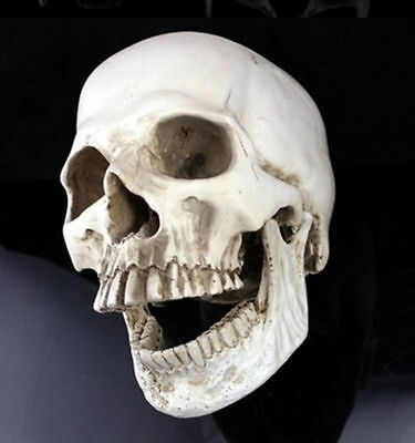 White New Human Skull Replica Resin Model Medical Realistic lifesize 1:1