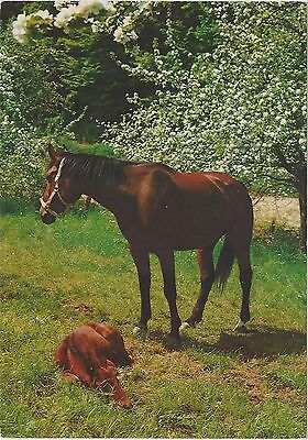 Horse Postcard -Bay Mare and her tiny foal - Ahhhh sweet