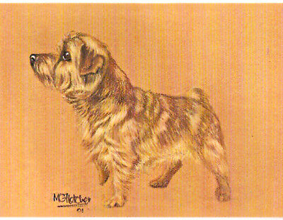 Norfolk Terrier Notecard Note Card by MC Fletcher LAST ONE