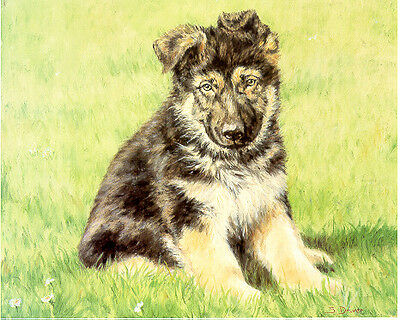 German Shepherd Puppy Limited Edition Art Print by UK Artist Sue Driver