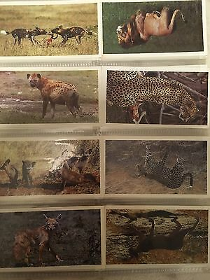 Cigarette Cards - Full Set. African Wildlife - John Player And sons 1990