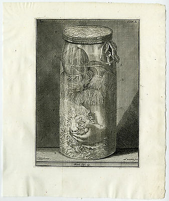 Antique Print-ARM-CHILD-JAR-POLYPOID SUBSTANCE-TAB 2-Ruysch-Huijberts-1744