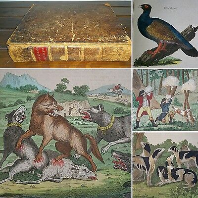 1792 Universal Sportsman 1st Edn COLOURED COPPER PLATES Birds HUNTING Horse GAME